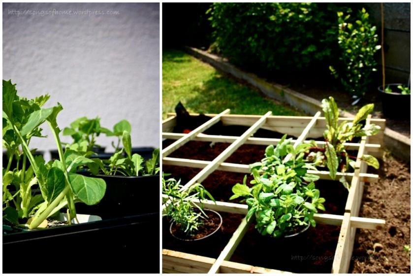 blog60 - square foot gardening