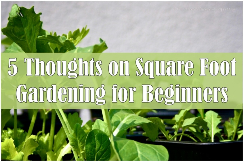 Five Thoughts on Square Foot Gardening for Beginners