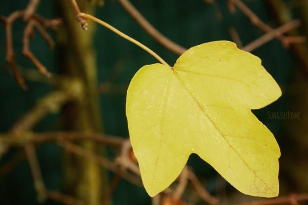 autumn leaf yellow