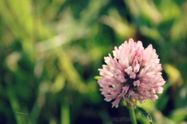 clover flower pregnancy infertility