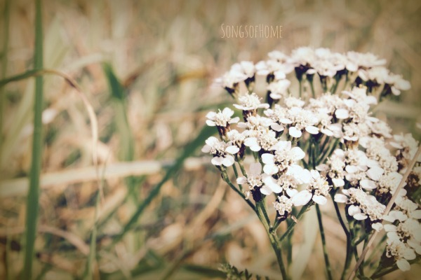 autumn flower white