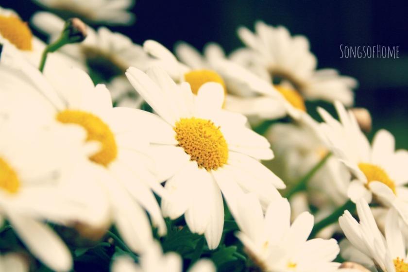 spring_SoH